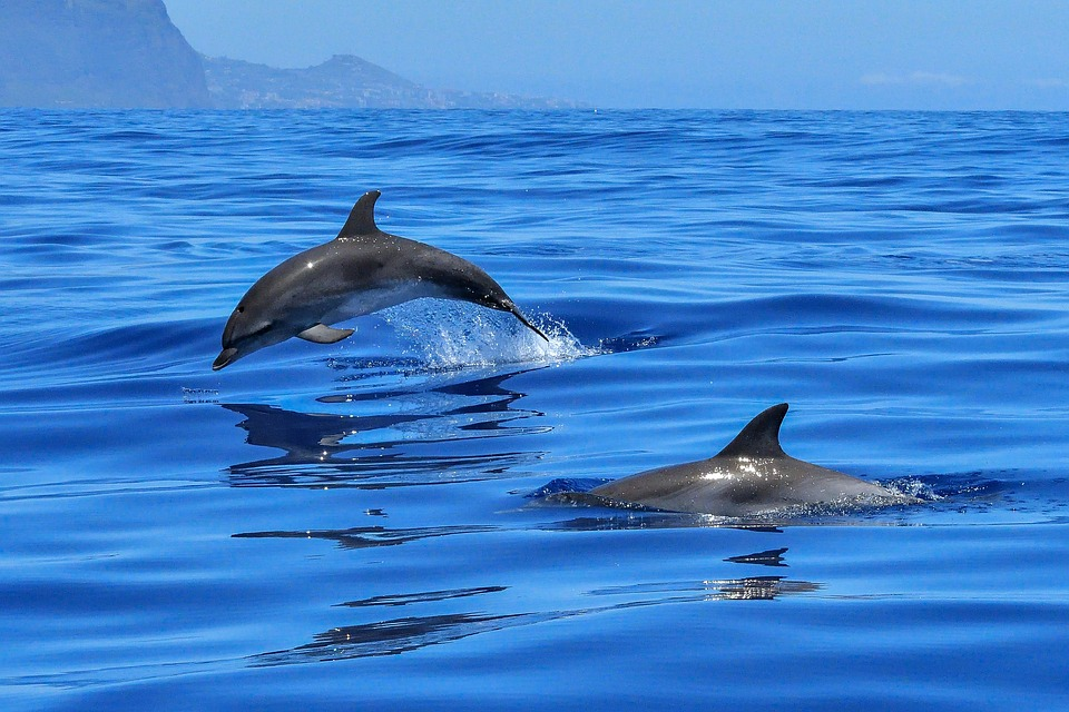 Smaller dolphins(1)